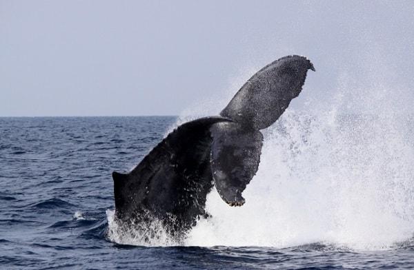15.11.30クジラ-min